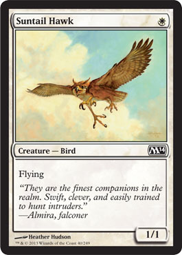 Suntail Hawk | Magic: The Gathering Card
